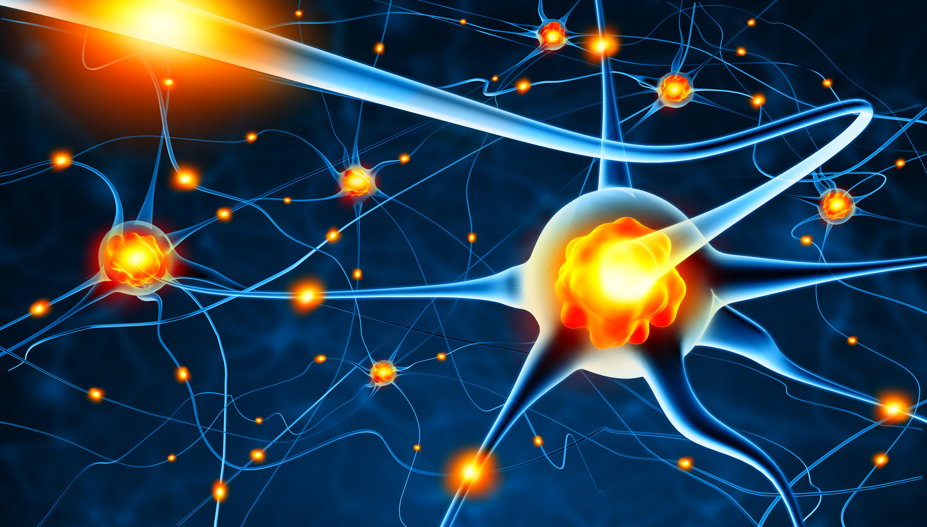 Neuroplasticity Workshop